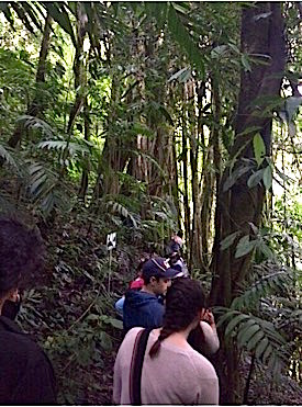 Photo: Group hike through dense foliage