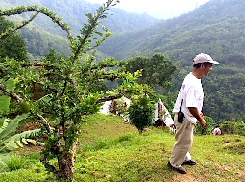 Photo: Local man with fruit tree and hills in background
