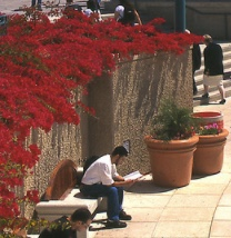 Photo: Student reading near red bougainvillea flowers