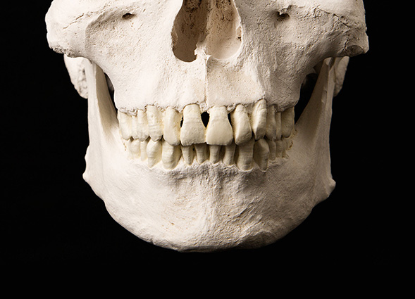 Dental remains document ancient lives for those who know how to interpret them.