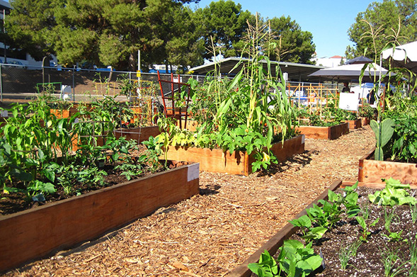 The SDSU Children's Center contributes its food waste to the College Area Community Garden, which turns it into compost. (Credit: CACG)