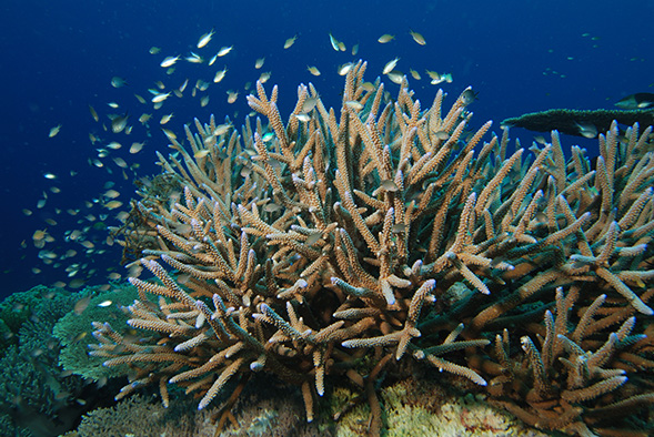 SDSU biology graduate student Amanda Alker's research focuses on the settlements of coral reefs.