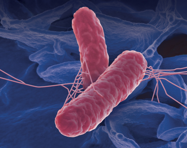 An artist's sketch of the Salmonella bacteria. Illustration by Tom Voss