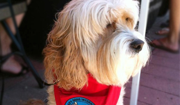 Baxter the therapy dog will be at the Library to help students relieve stress.