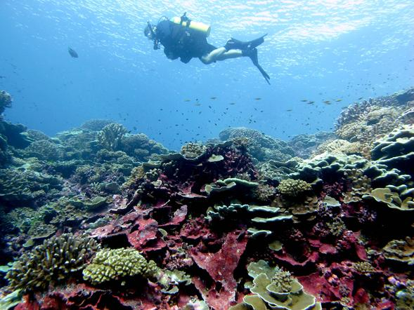 we share a molecular armor coral reefs newscenter sdsu a diver swims in the reef off millenium island in the southern line islands