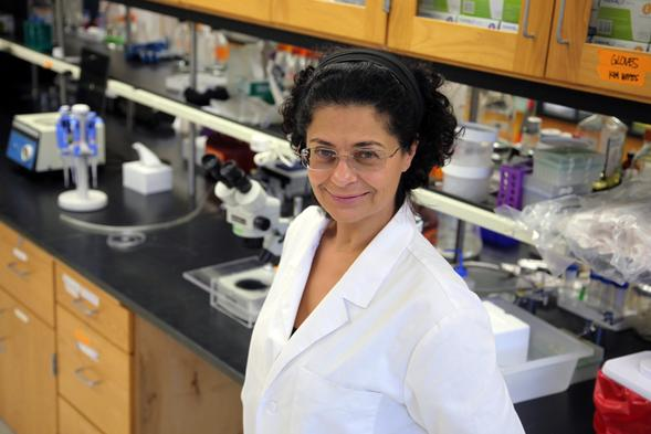 Manal Swairjo is trying to figure out the inner workings of transfer RNA. (Photo: Jeneene Chatowsky)