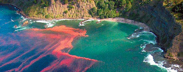 Red algal bloom at Leigh, near Cape Rodney, New Zealand. Photo by Miriam Godfrey for New Zealand's National Institute of Water and Atmospheric Research.