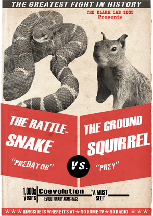 Ground squirrels and rattlesnakes have co-evolved for thousands of years.