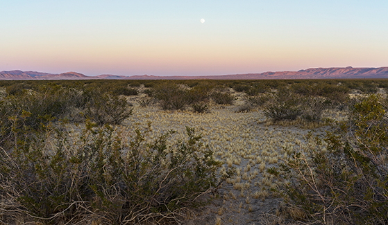 The Mojave Desert (Photo: Kim Stringfellow)