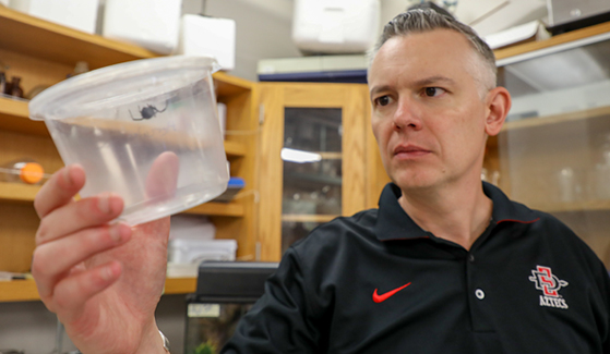 SDSU associate professor of analytical chemistry Gregory Holland holds a Black Widow spider