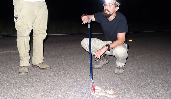 Hannes Schraft and a research team gathered rattlesnakes near Yuma, Arizona.