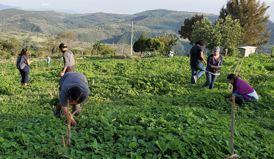 Students research food and farming practices in Oaxaca, Mexico.