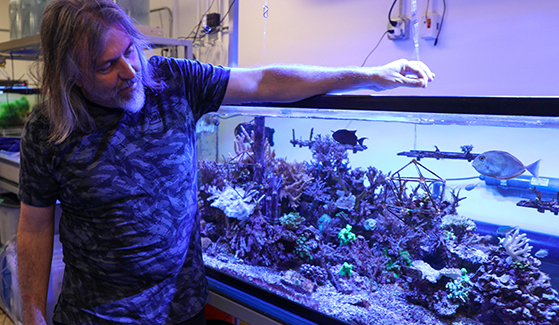 SDSU viral ecologist Forest Rohwer was chosen for a Moore Foundation award to research how coral reefs adapt to climate change. Photo: Scott Hargrove