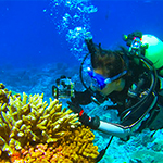 Yan Wei Lim, SDSU graduate student and author on the paper, exploring corals in the southern Line Islands.