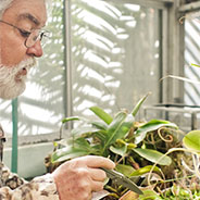 Bob Mangan tends to the SDSU Greenhouse.