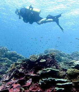 A diver swims in the reef off Millenium Island in the southern Line Islands