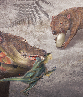 A rendering of the early marsupial relative, Didelphodon vorax. (Illustration: Misaki Ouchida)