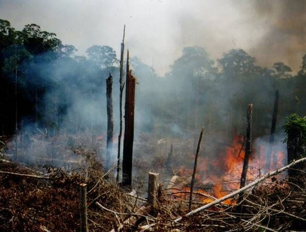 Deliberate burning to clear felled forest for small-scale agriculture over a deep peat area, in Riau Province, Sumatra in 1990. Photo by Michael Brady, Canadian Forest Service.