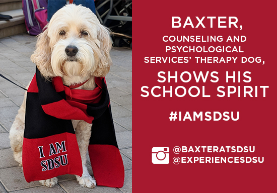 follow baxter @baxteratsdsu for more about CPS' therapy dog