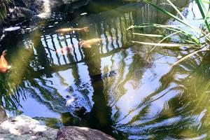 relaxing_pond.jpg