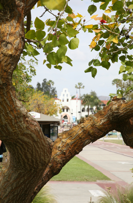 Photo: View of Hepner Hall through limbs of a tree