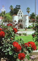 Photo: SDSU scene with roses in bloom